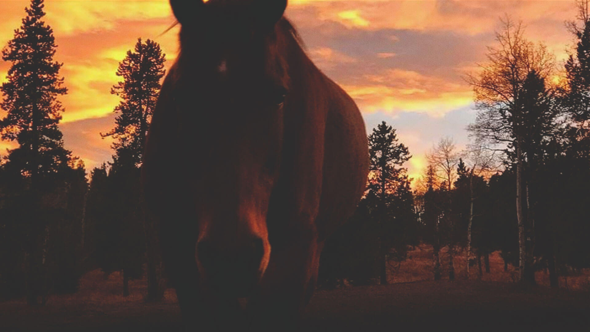 Homeplace Ranch